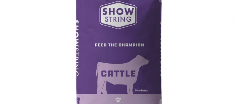 68.showstring_beef